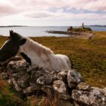 St. John's Point - Mc Swyne with horses