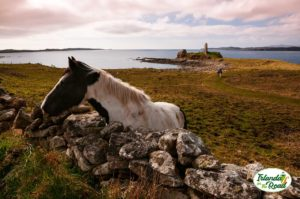 St. John's Point - Mc Swyne with horses